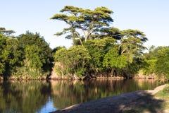 Landskap på den Grumeti floden Royaltyfri Foto