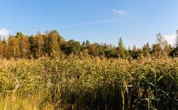 Landskap på kanten av skogen Royaltyfri Bild