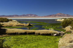 Landskap på Salar de Taras Royaltyfri Bild