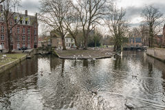 Landskap på sjön Minnewater i Bruges, Belgien Arkivbilder