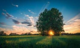 Landskap på solnedgången Arkivfoto