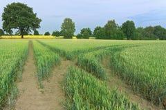 Landskap platsen av en gräsplan som sparas med en gaffel i spår och träd för en traktor på horisont royaltyfri bild