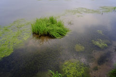 Landskap: Reflexion och himmel för grönt gräs för damm royaltyfria bilder