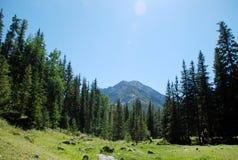 Landskap Ryssland, Lake Baikal och att fotvandra som reser, berg, rekreation, skog, shumack, cederträfilial, ir-träd Royaltyfri Bild