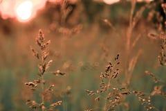 Landskap säsongen, sommarsolnedgången, solgräs, Royaltyfri Foto