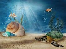 landskap shells undervattens- Arkivbild