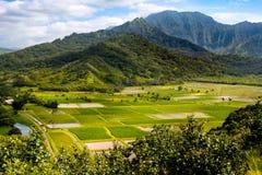 Landskap sikten av den Hanalei dalen och göra grön tarofält, Kauai Arkivbilder