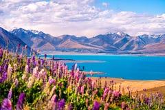 Landskap sikten av sjön Tekapo, blommor och berg, Nya Zeeland Arkivbild