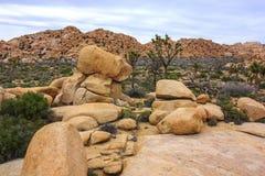 Landskap sikten av stenblock, träd, kakturs från den fotvandra slingan i Joshua Tree National Park, Kalifornien, Förenta staterna Royaltyfri Bild