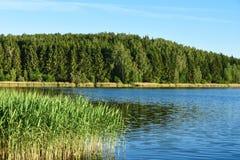 Landskap sjön med vasser mot en skog i aftonen i solljuset i Ryssland, Vitryssland, Ukraina arkivbild