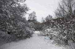 Landskap snö, vinter i Frankrike, Auvergne royaltyfria bilder