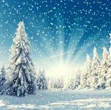 Landskap - snöfall Royaltyfria Bilder