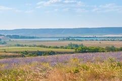 Landskap solig gryning i ett blommafält, romantisk tid Fotografering för Bildbyråer
