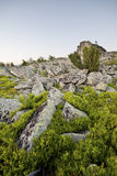 Landskap solig gryning i ett fält Royaltyfria Bilder