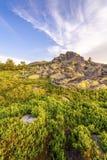 Landskap solig gryning i ett fält Royaltyfria Foton