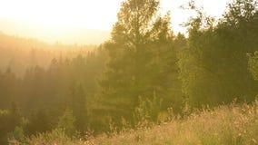 Landskap solnedgång i en bergskog i ängen Träd och äng med brokigt gräs exponerat av solnedgångpanelljuset Flyga en va stock video