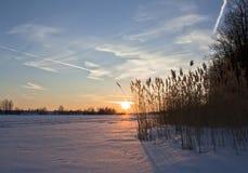 Landskap soluppgång fryst flod, vasser i morgonmisten arkivfoton