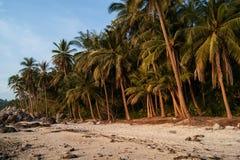 Landskap som är tropiskt med palmträd och vitsand royaltyfria foton
