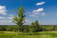 Landskap, sommar, grönt gräs och blå himmel royaltyfri bild