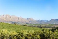 Landskap Stellenbosch Arkivbilder