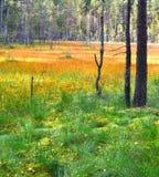 Landskap swamp Fotografering för Bildbyråer