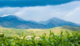 Landskap tea lämnar, berg och floden i Indien Royaltyfri Bild