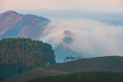 Landskap teakolonier och berg i engryning ogenomskinlighet, Indien Royaltyfri Fotografi