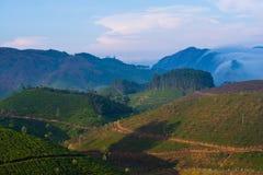 Härligt landskap med kolonier för en tea, och berg i engryning haze Royaltyfri Foto