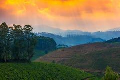 Landskap teakolonier och berg i engryning ogenomskinlighet, Indien kerala arkivbild