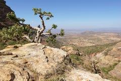 Landskap Tigray, Etiopien, Afrika Royaltyfri Foto