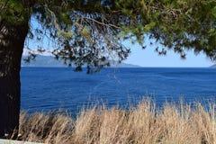 Landskap: Träd på havskusten och bergen Royaltyfri Foto
