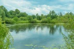 Landskap: träd runt om sjön, regn faller, reflexioner på vattnet Arkivfoto