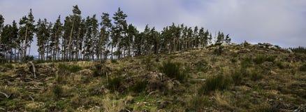 Landskap träd som förstörs Arkivbilder