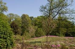 Landskap trädgård för japansk stil i vårwitnkörsbär Arkivfoto