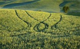 landskap tuscan Royaltyfria Foton