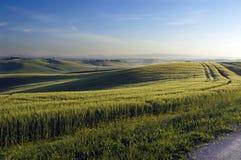 landskap tuscan Royaltyfri Fotografi