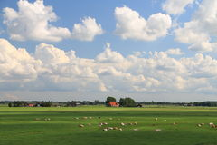 Landskap: typisk holländare Royaltyfria Bilder