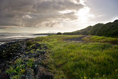 Landskap ut ur Auckland Royaltyfri Bild