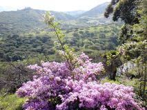 Landskap Villcabamba, Ecuador Arkivbild