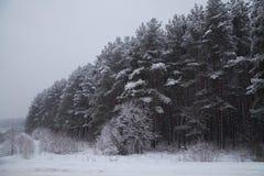 Landskap Vinterskogtexturer Bakgrund Landskap arkivbild