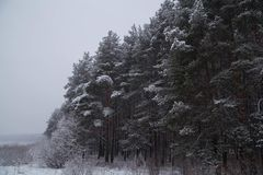 Landskap Vinterskogtexturer Bakgrund Landskap royaltyfria bilder