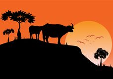 Landskapaftonsikt av fältet med på solnedgångbakgrund vektor illustrationer