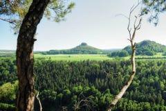 Landskapanglosaxare Schweiz Fotografering för Bildbyråer