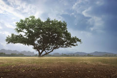 Landskapbakgrunden av fältet Royaltyfri Fotografi