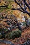 Landskapbild av röda och gula färgträdsidor arkivfoto