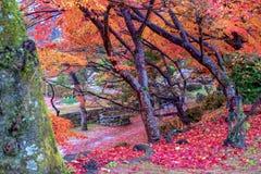 Landskapbild av röda och gula färgträdsidor fotografering för bildbyråer