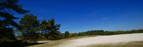 LandskapBrunssumerheide Nederländerna Royaltyfri Bild