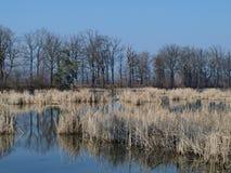 Landskapdamm, södra Bohemia Arkivbilder