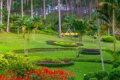 Landskapdesignen av kopplar av den tropiska trädgården, Arkivbilder