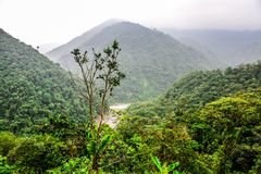 Landskapdjungel i Amazonia av Ecuador Fotografering för Bildbyråer